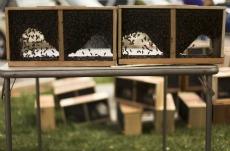 honey bees, italian, packages, blacksburg, christiansburg, virginia, new river valley beekeepers association