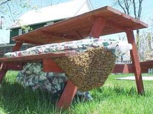 Join the NRVBA for the 2014 beekeepers' picnic on July 12 in Blacksburg.