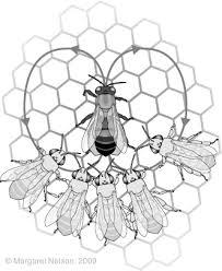 VT honey bee researcher Dr. Richard Fell will present the basics of dance communication at the Aug. 14 NRVBA meeting.
