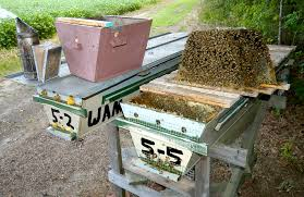 Top Bar Hives Have Recently Become Popular In The Western World, But The  System Has A Very Long History And In Fact Revolutionized Beekeeping By  Allowing ...